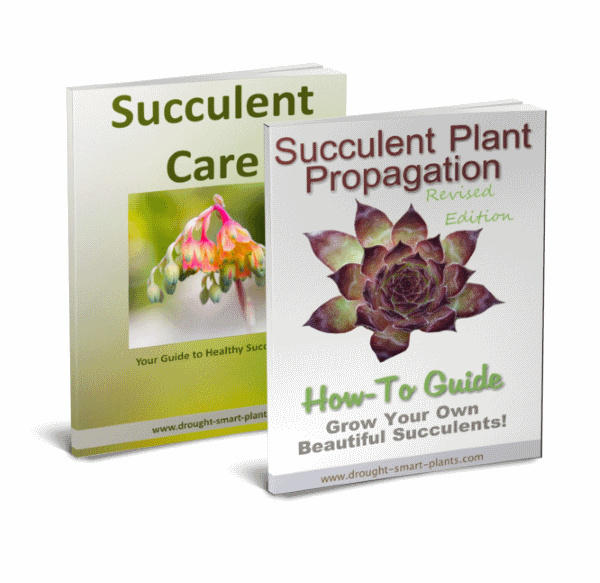 Buy the Succulent Plant Propagation e-Book with the Succulent Care Handbook for one low price