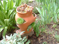 My Strawberry Pot with succulents