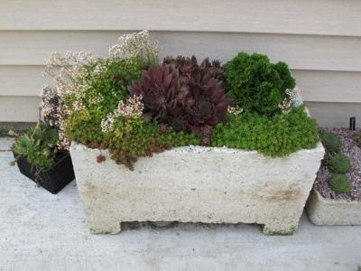 Gorgeous Succulent Trough by Chris Rentmeister