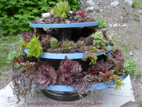 The finished renovated satellite dish planters