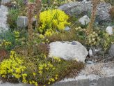 Garden Design Ideas combine plants with the best qualities - drought resistance, color and long life