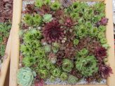 Succulent Crafts E-Course