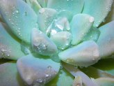 Succulent Gardening for Beginners
