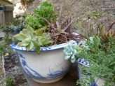 More Succulents...