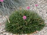 Weed-free Xeriscaping