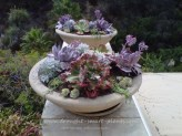 Winterizing Succulents E-Course...