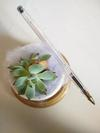Succulent top view (pen for size comparison)