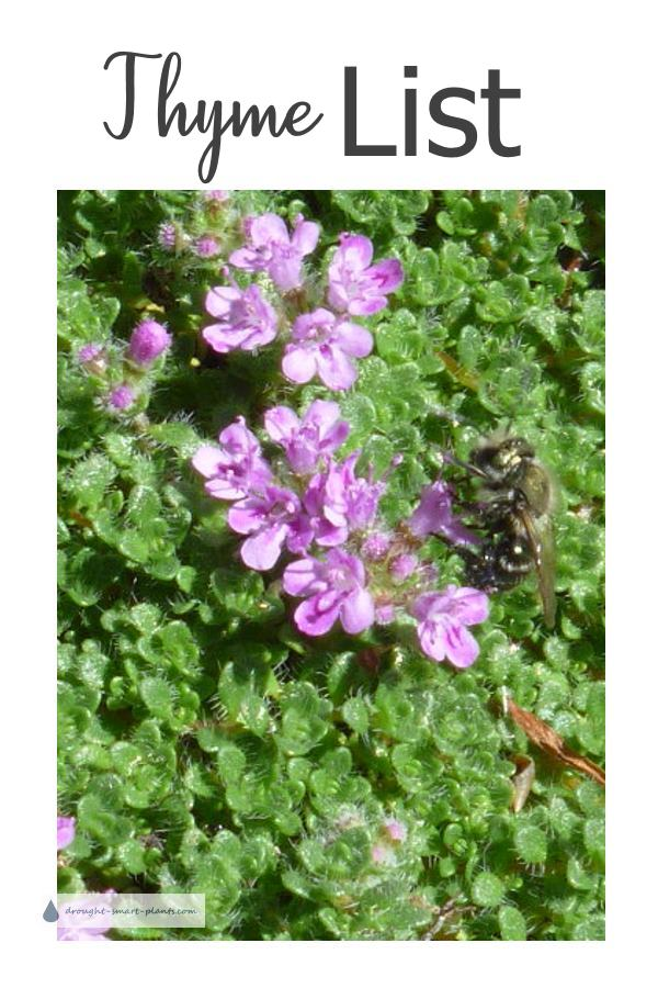 Thyme List - My Favorites for Landscaping & Xeriscaping