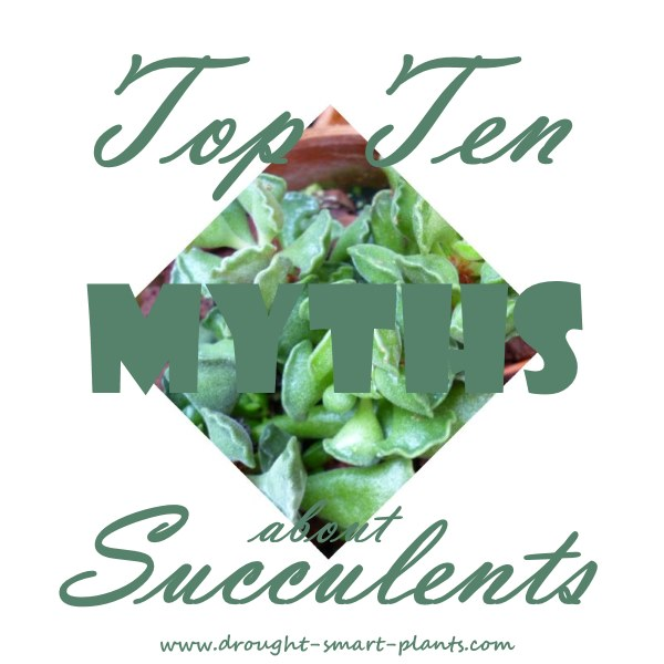 Top Ten Myths about Succulents