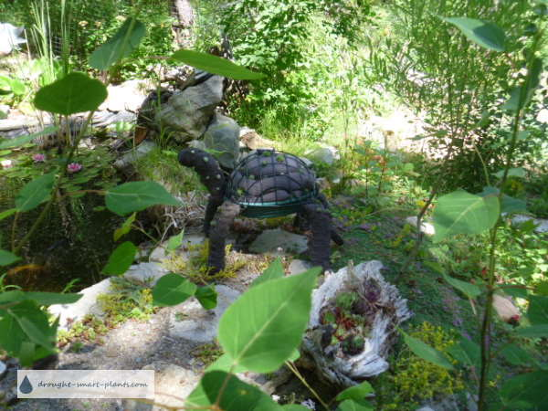 The finished Topiary Turtle, by the pond