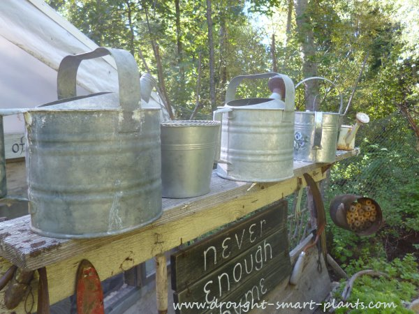 Galvanized watering cans, waiting for service...