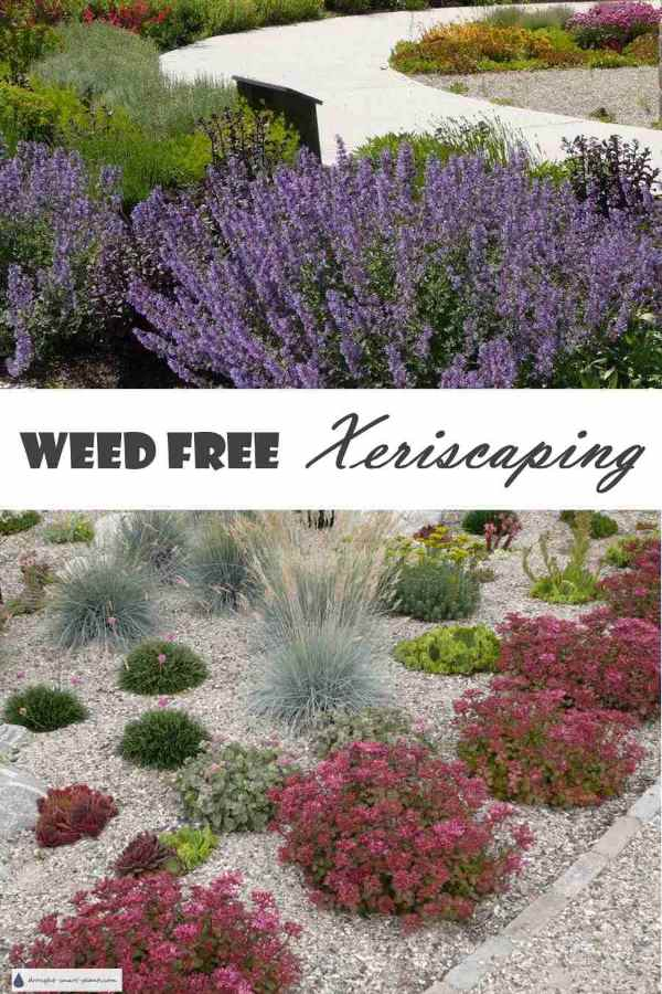Weed Free Xeriscaping