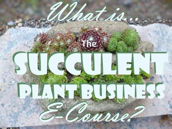 What is the Succulent Plant Business E-Course?  What do I get?