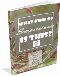 What Kind of Sempervivum Is This, anyway?  Identify your favorite hens and chicks in this e-book...