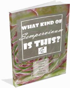 What Kind of Sempervivum Is This E-Book