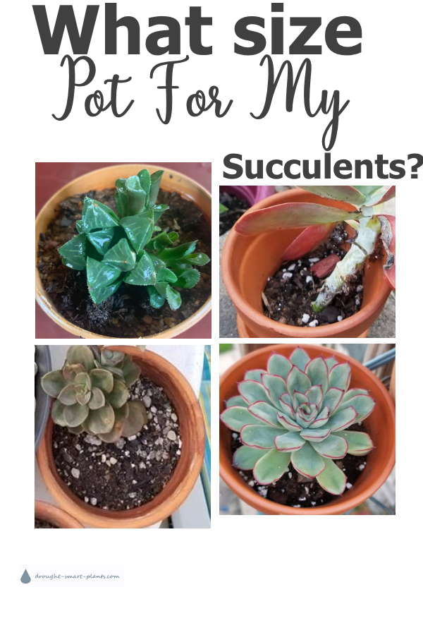 Succulents Pot Size How Big A Pot Do They Need
