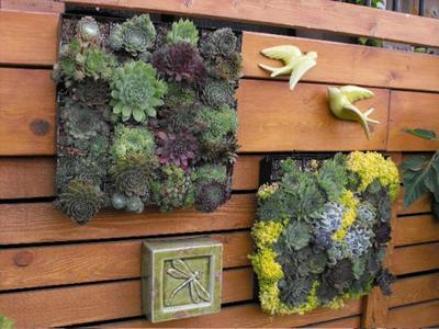 Succulent Mosaics for a wood fence