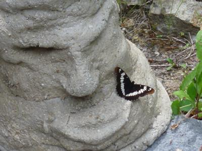 White Admiral butterfly admiring the grumpy guy