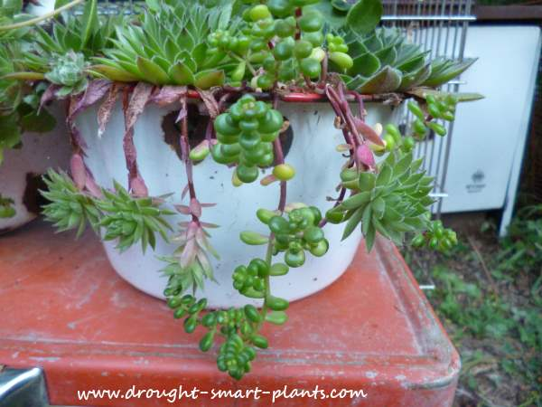 Fortunately, they make ideal succulent planters