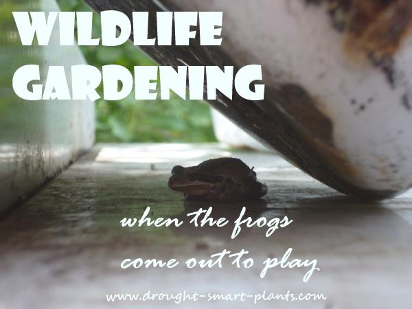 Wildlife Gardening - make your garden a haven for the wild creatures...