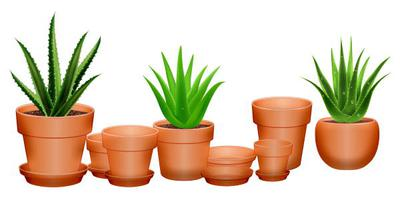 Aloe in Clay Pots