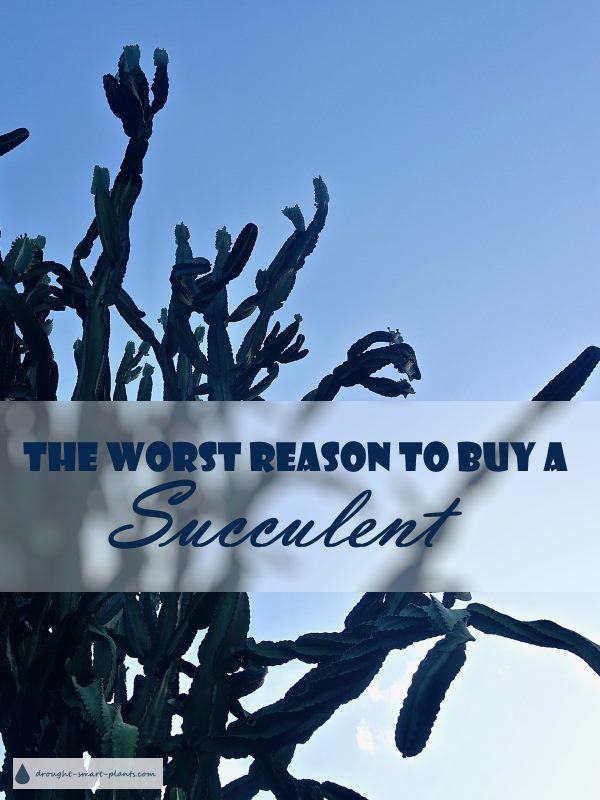 The Worst Reason to Buy a Succulent