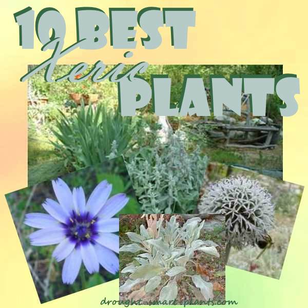 10 Best Xeric Plants