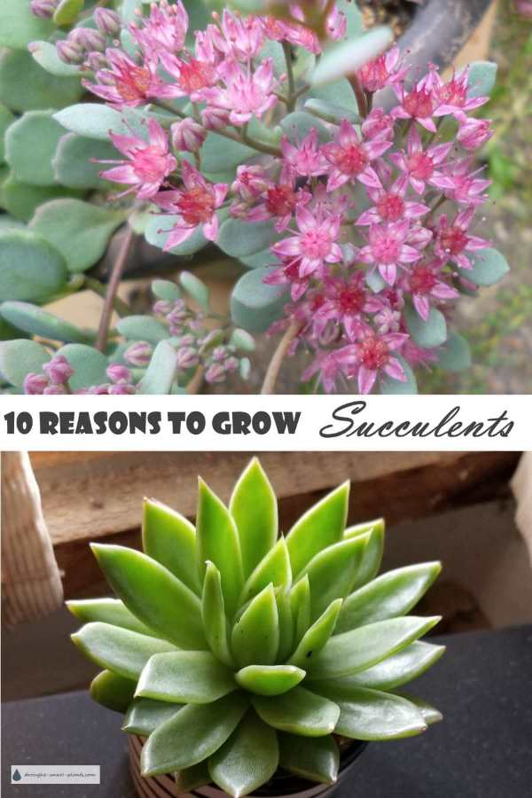 Ten Reasons to Grow Succulents...