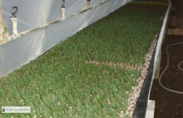 The new system of rooting conifer cuttings