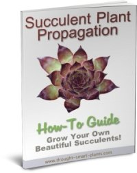 A Picture of Succulent Plant Propagation E-Book