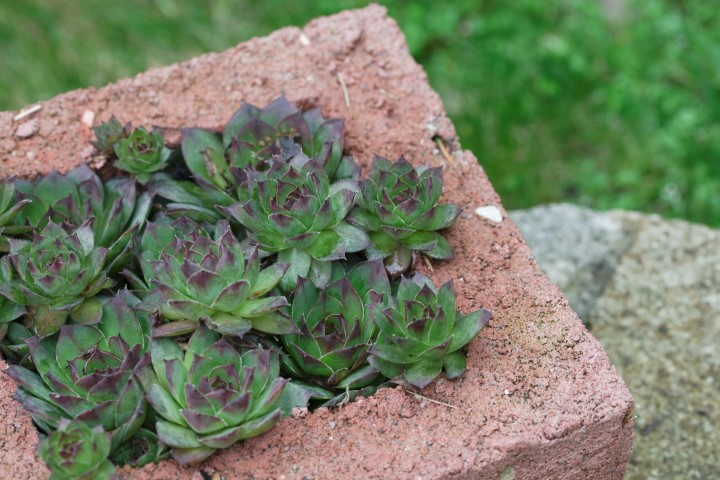 and a rustic Quirky Hypertufa Planter