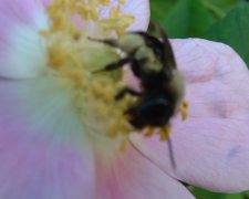 see my favorite Plants for Bees