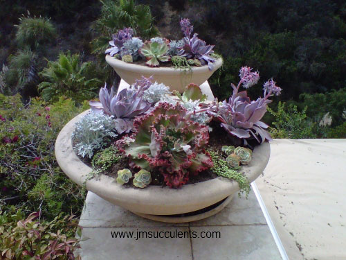 Gorgeous mixed planter by Michelle