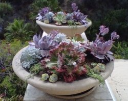 Winterizing Succulents E-Course - it's FREE!