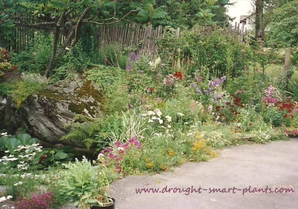 Mary's lovely xeric garden with a plethora of drought loving plantings...