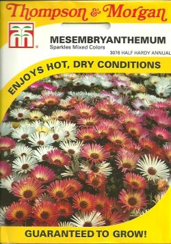 A Picture of Mesembryanthemum Seed Packet