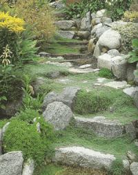 Thyme cascading down stone steps