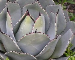 Beautiful succulents...