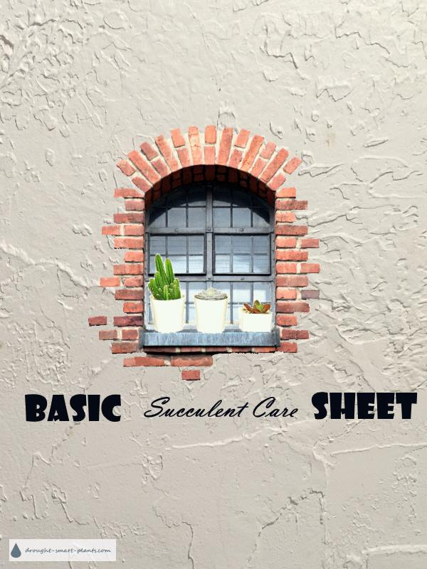 Basic Succulent Care Sheet
