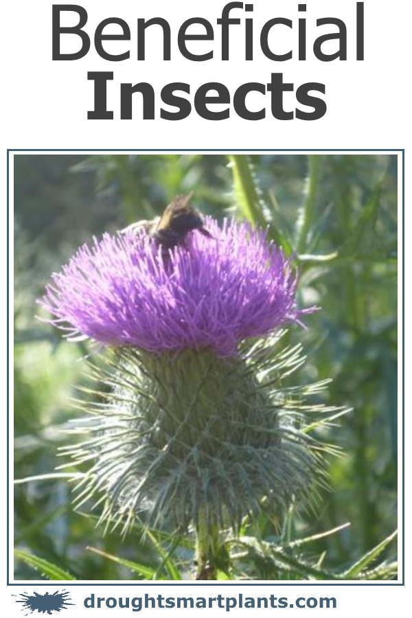 Beneficial Insects; the good guys...