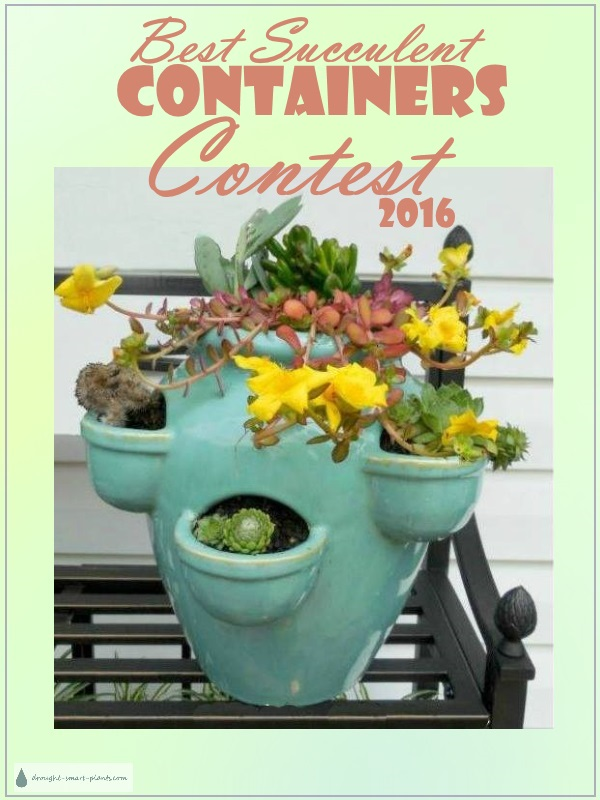 Best Succulent Containers Contest 2016