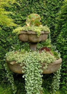 The winner of the Best Succulent Containers Contest 2013