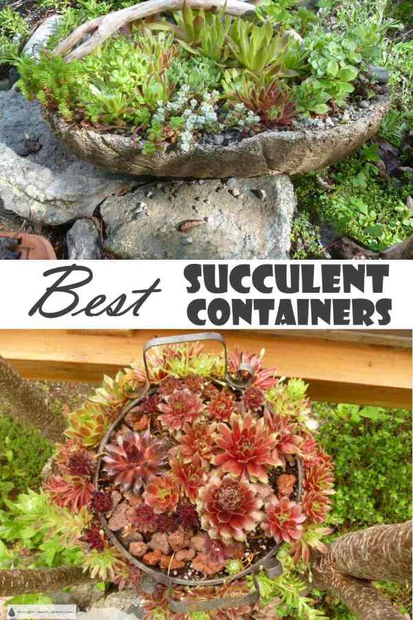 Best Succulent Containers - imagination, inspiration and tips... Gardening | Succulents