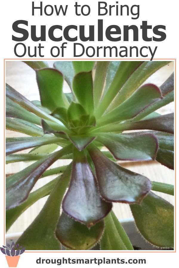 How to Bring Succulents Out of Dormancy