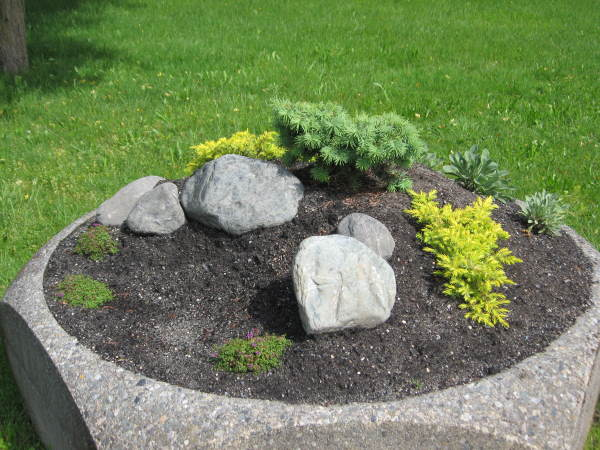 Several small conifers are a foil for the other smaller plants nestled among rocks