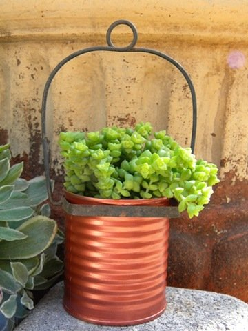 Copper painted cans combine perfectly with succulents at Carolyn's Homework...