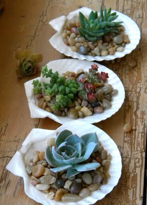 And shells and succulents...