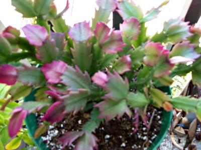 Notice the pinkish leaves