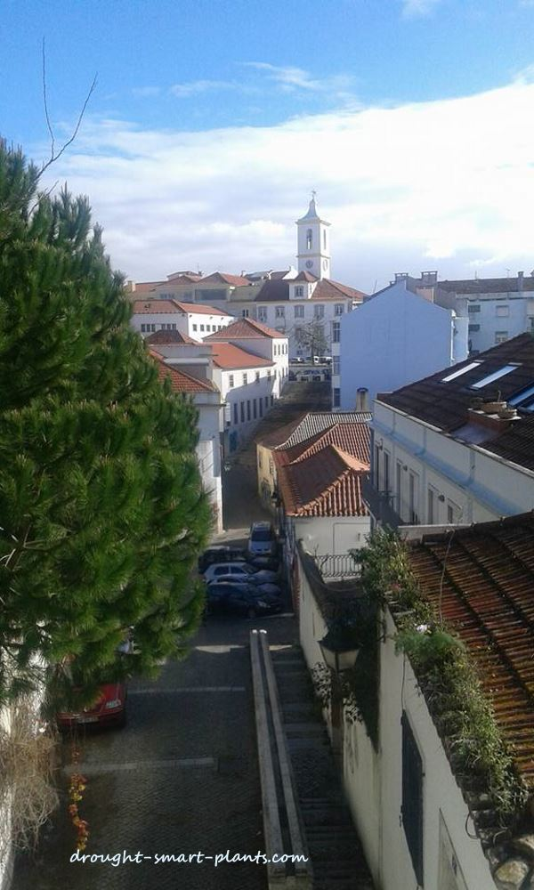Green Roofs in Portugal