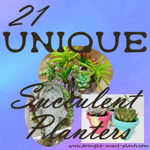21 Unique Succulent Planters